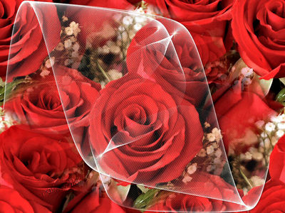 les roses  normal_1315318bx