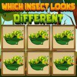 أي حشرة تبدو مختلفة